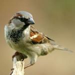 Small Wild Birds